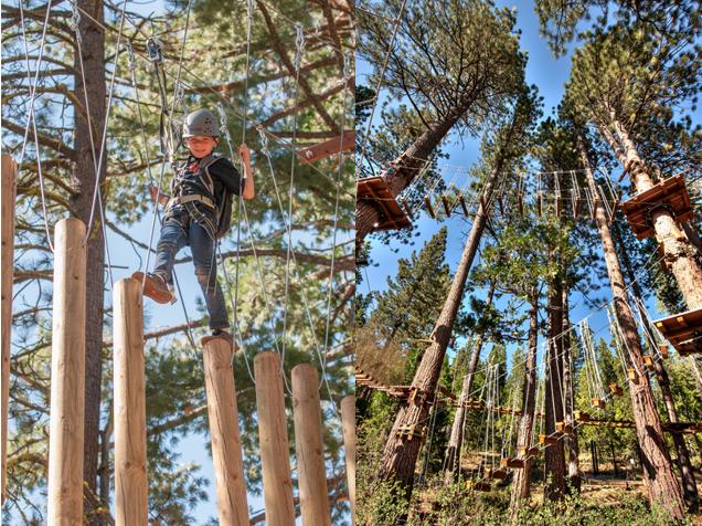 tahoe treetop