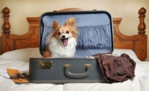 dog-excited-to-be-in-hotel-pet-travel-pet-expert-Steve-Dale