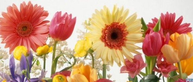 summer-flowers-mix-facebook-cover-timeline-banner-for-fb